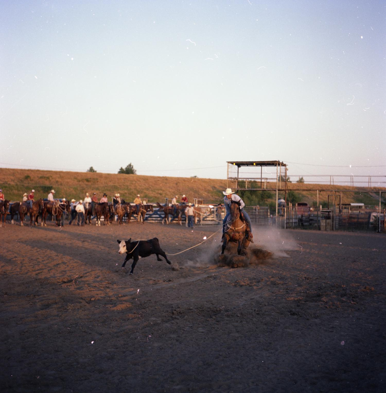 Man roping calf at North Texas Cutting Horse Association Finals