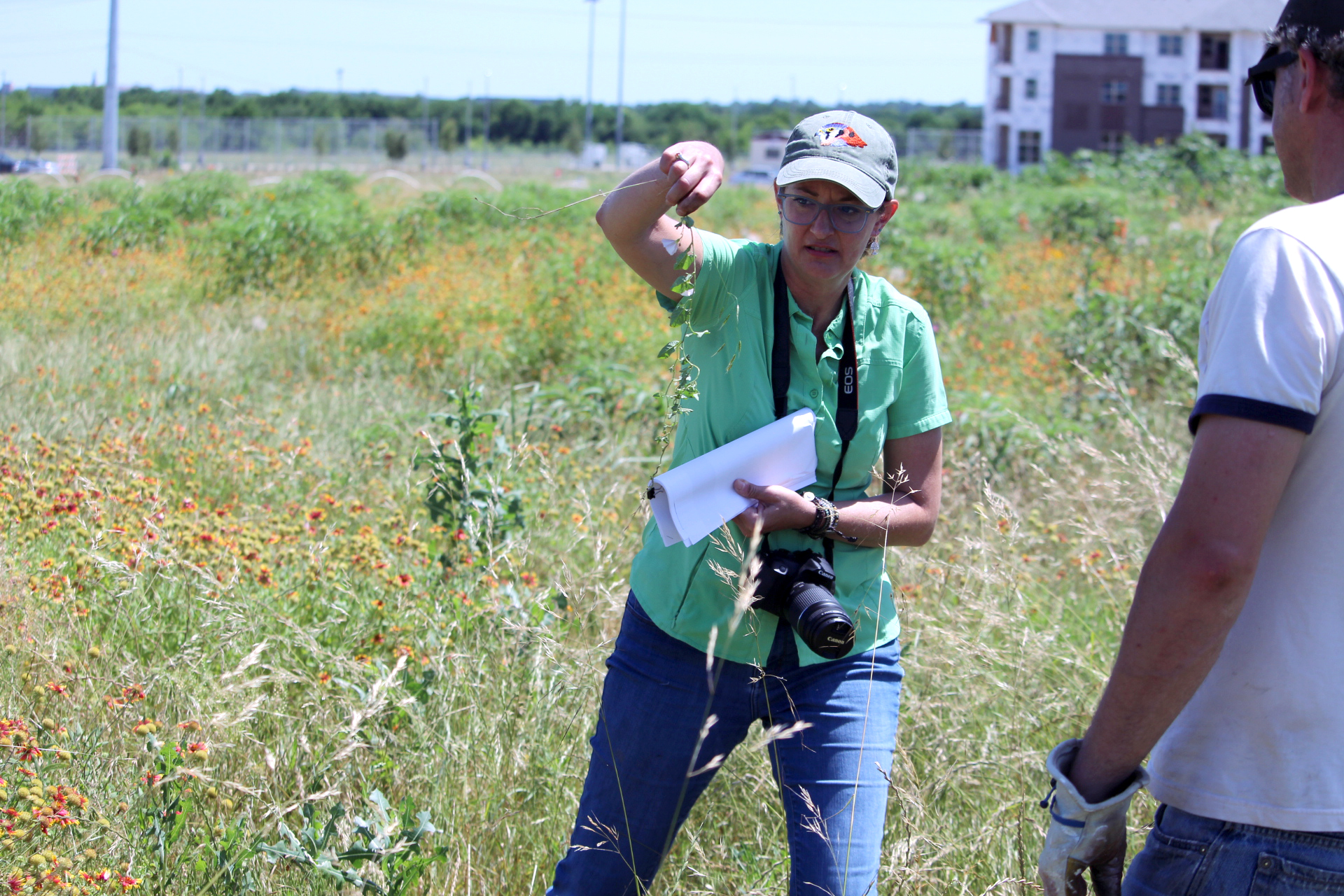Bringing back Texas: Team of UNT faculty, staff and students work to restore our prairies