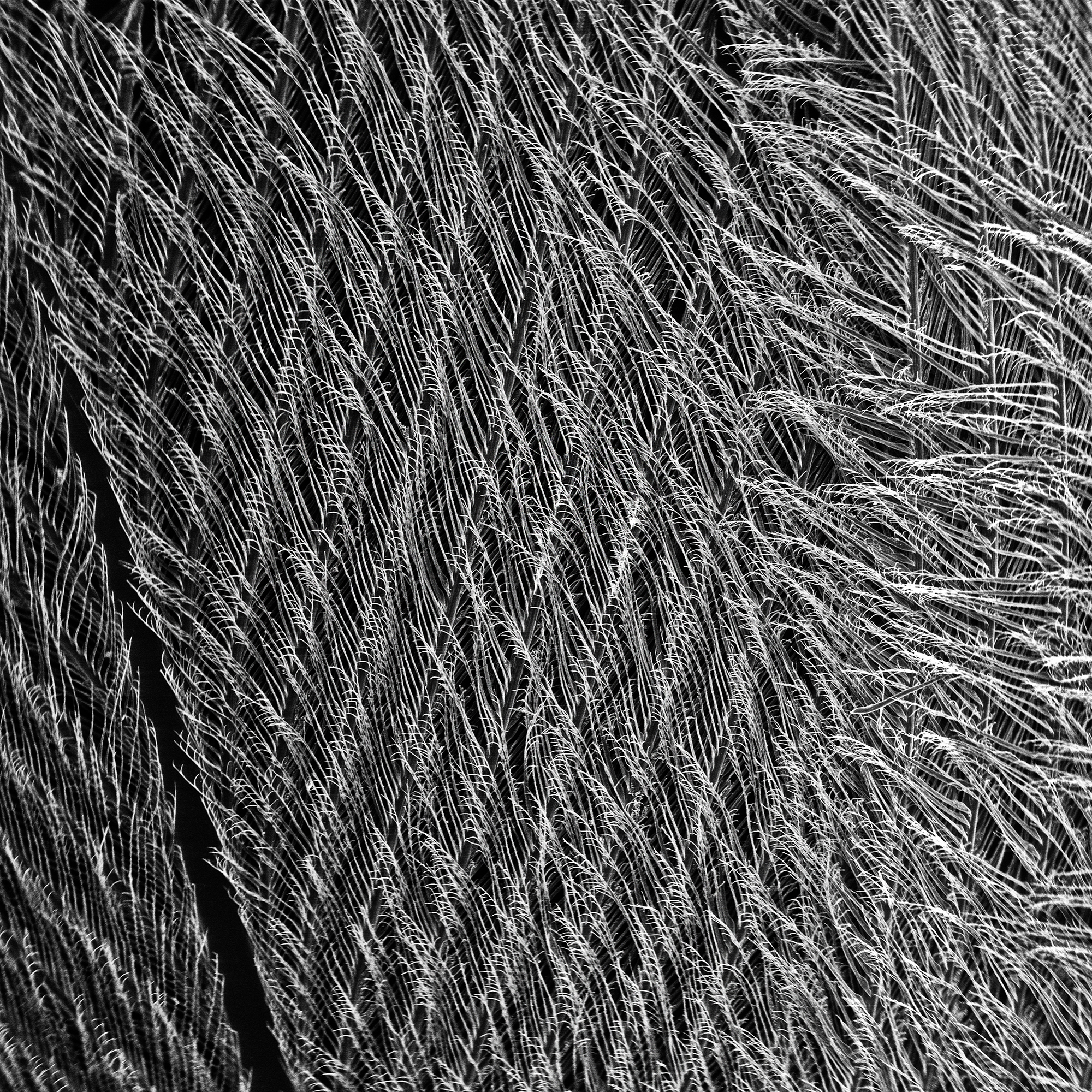 Scanning Electron Microscope photo of black carbon on feather Photo: Anna Lee