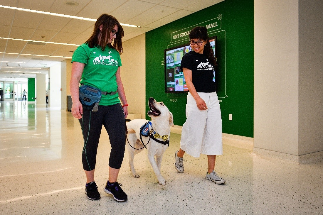 University of North Texas students Alyssa Schmidt (left) and Maasa Nishimuta work with Drill Bit, who is being trained as a service dog to a military veteran, inside UNT's University Union.