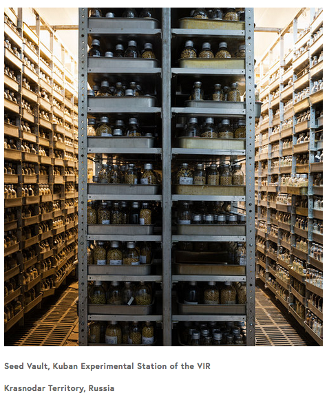 UNT distinguished research professor documents international seed banks in a solo exhibition Dornith Doherty: Archiving Eden at the National Academy of Sciences Art Gallery